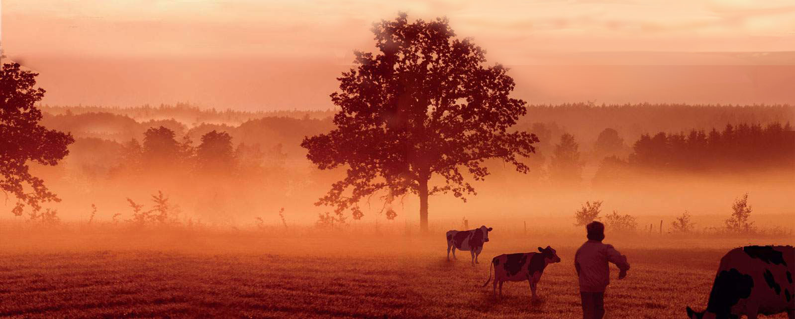 Cows in the Fog by S.T. Haggerty